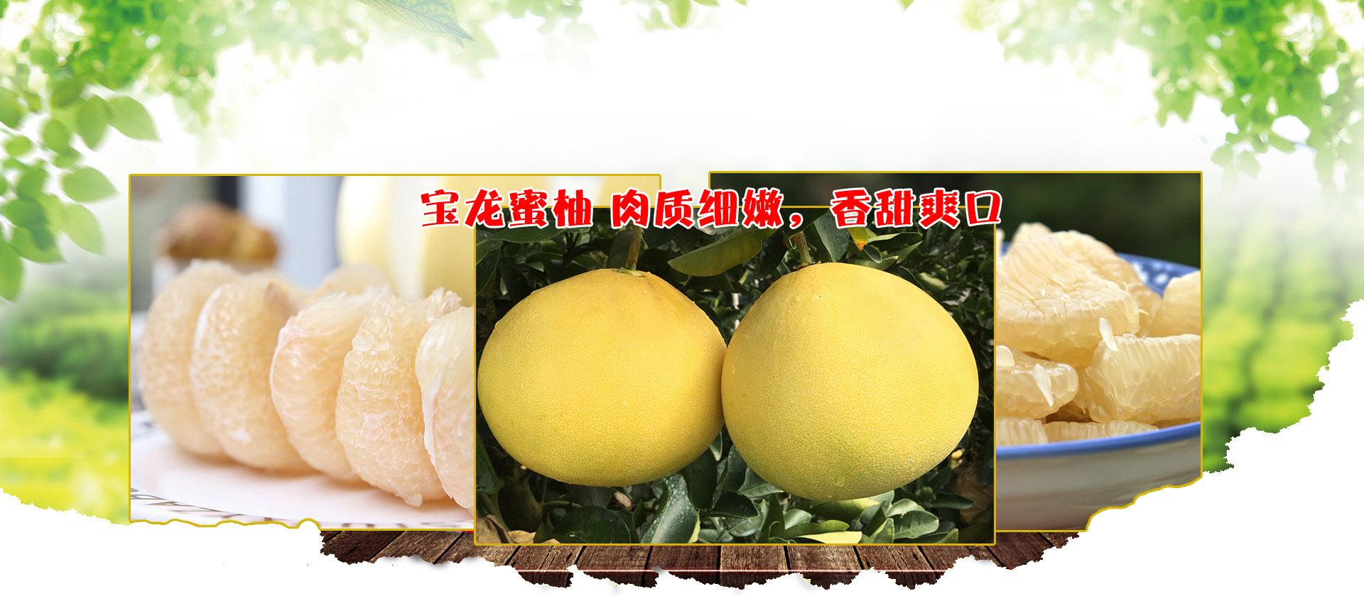 重庆柚子苗
