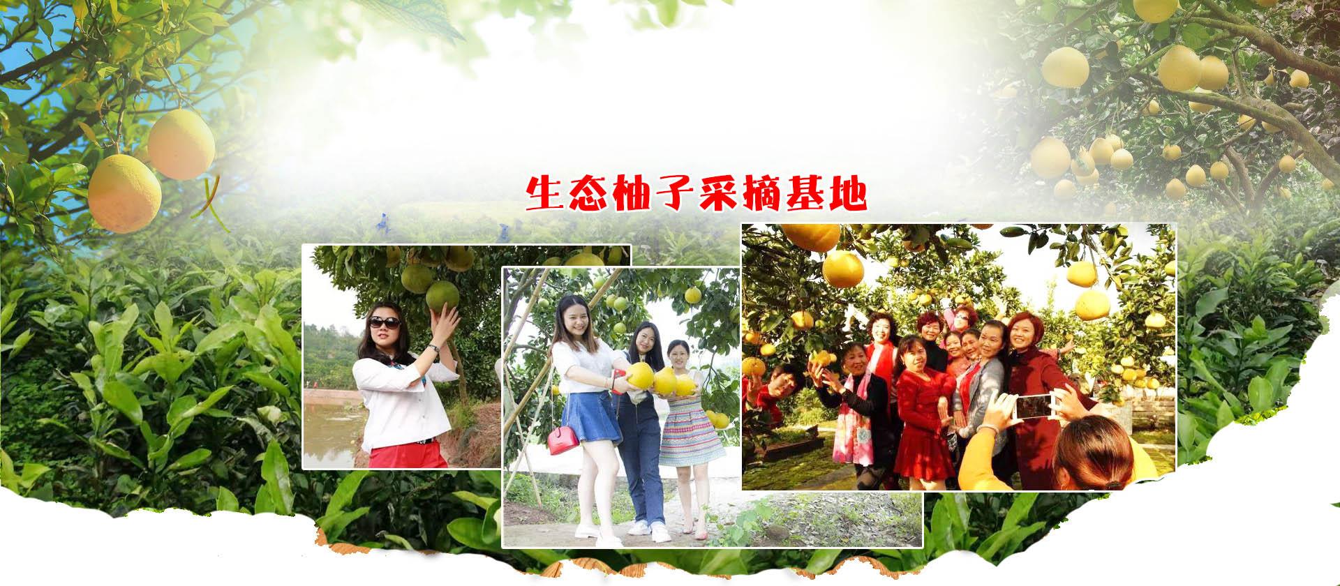 重庆柚子采摘
